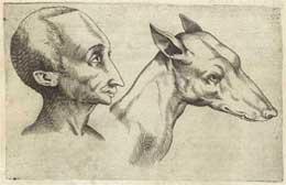 manset-animal