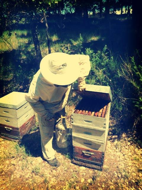 Les ruches d'Arnaud Rocheux