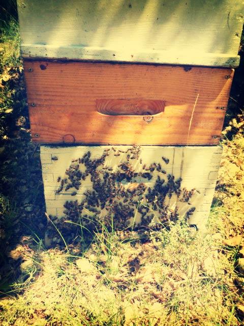 Les ruches d'Arnaud