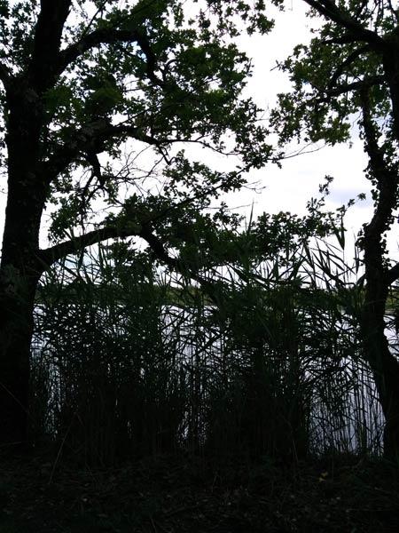 Parc Naturel de la Brenne