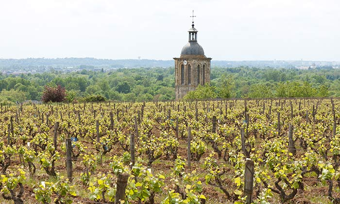 Vignes AOC Vouvray et clocher église Vouvray © AOC VOUVRAY
